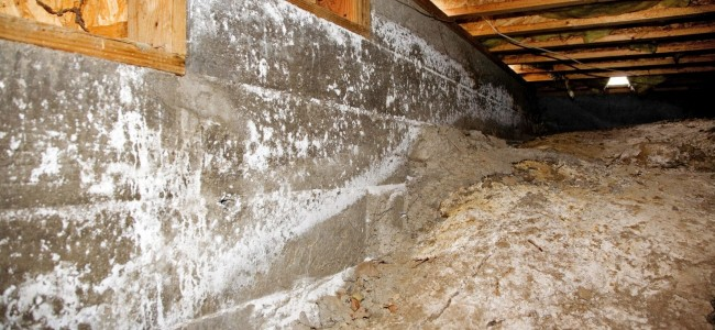 The Importance of Crawl Space Mold Removal in Long Island