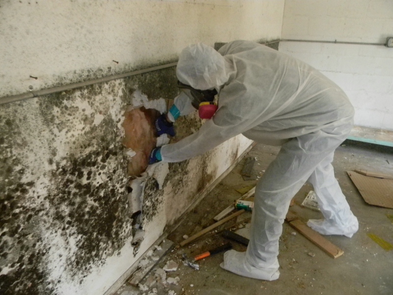 Mold Removal: How to Fight Mold in your Home