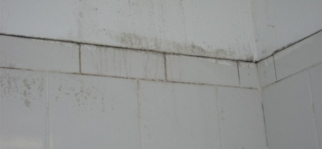The Importance of Basement Mold Removal in Kings County NY