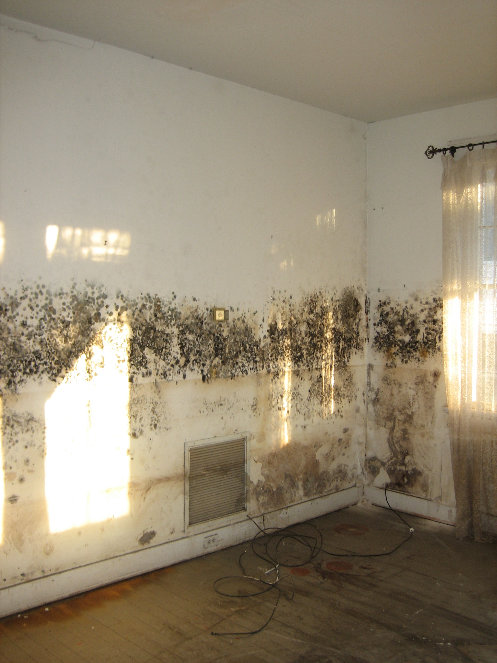 basement mold removal in kings county ny