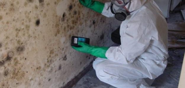 5 Steps to Take for Effective Mold Remediation in Kings County NY