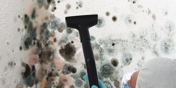 How to Save On Mold Remediation in Long Island NY