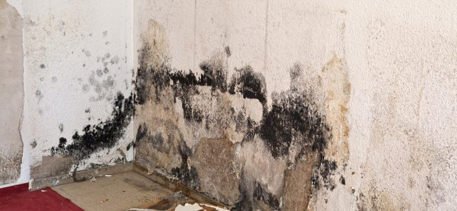 A Simple Guide to Successful Mold Remediation