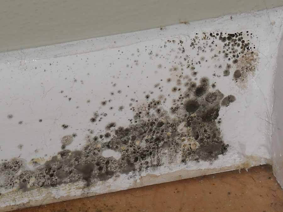 5 Don'ts of Mold Removal Staten Island, NY