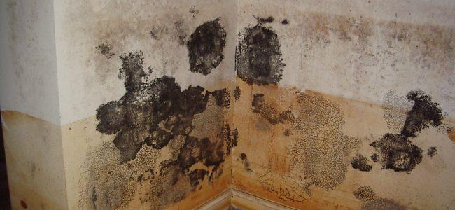Will Painting Over Mold Kill It? Staten Iland, NY